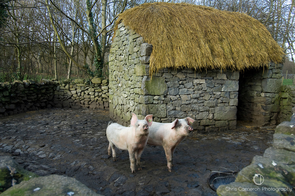Stone pig stye with thatched shed at Bunratty Castle, County Clare, Ireland.