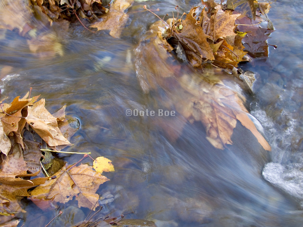 close up of stream with fallen leaves