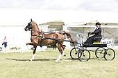Class 24 - Novice Hackney Horse
