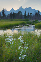 Wildflowers and the Teton Range at sunset seen from Schwabacher's Landing, Grand Teton National Park Wyoming