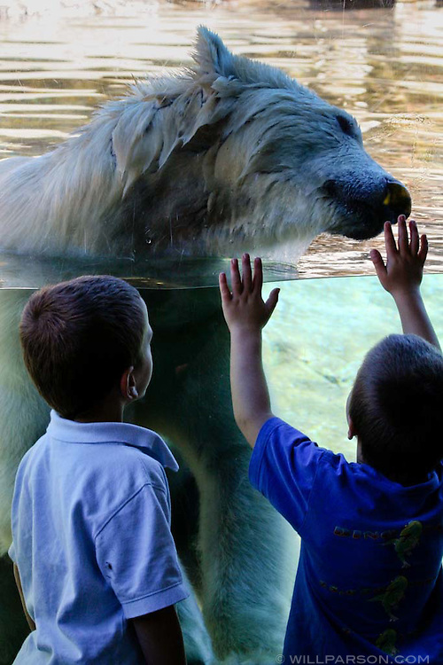 Two children enjoy the Polar Plunge exhibit at the San Diego Zoo.