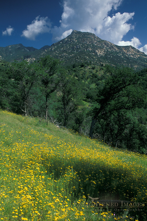 Spring in the Sierra Foothills, Double Eagle Ranch, near Three Rivers, Tulare County, California