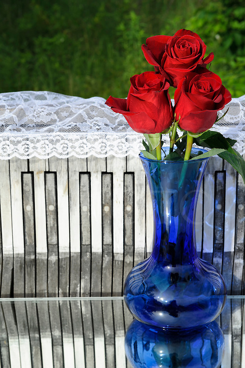 Red roses in blue vase with weathered piano keyboard background photographed outside on mirror.
