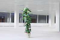 Potted plant in empty office space night