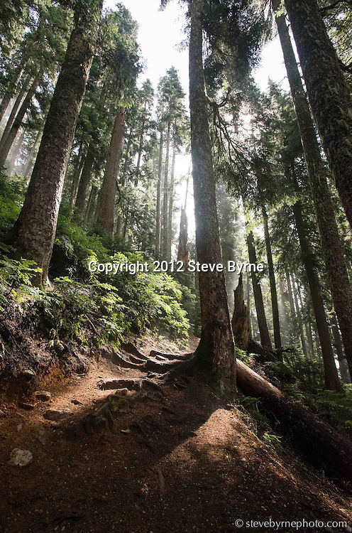 Beams of light stream through a recently soaked forest along the Pacific Crest Trail near Snoqualmie Pass, Washington.