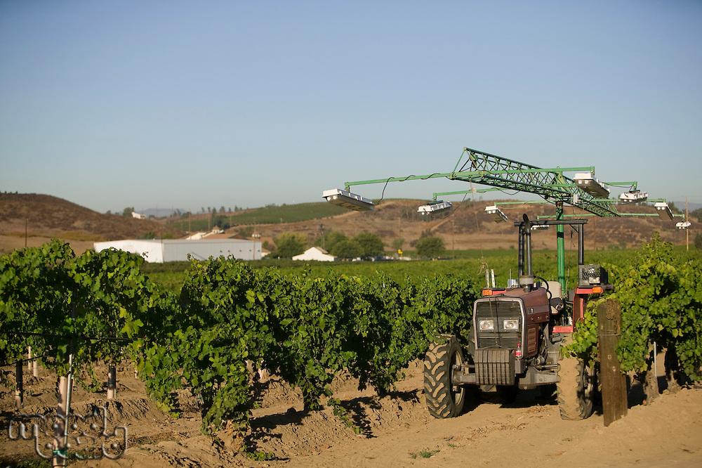 Agricultural sprinkler in vineyard