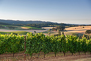 Carlton Cellars Vineyard in the Willamette Valley of Oregon