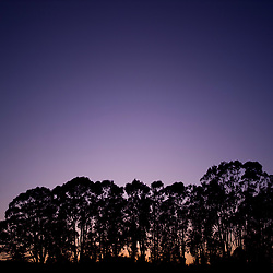 Trees at Sunset against Purple Sky
