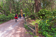 Vancouver, Canada--May 3, 2016. Hikers on a trail explore a rain forest in Vancouver Canada. Editorial and Illustrative.