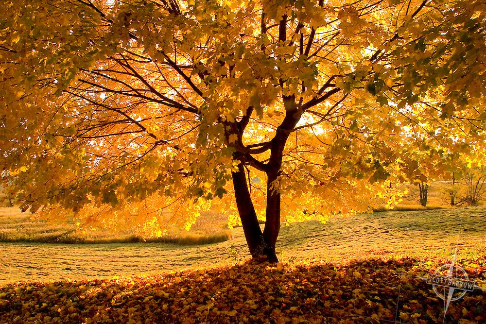 Fall foliage scene.