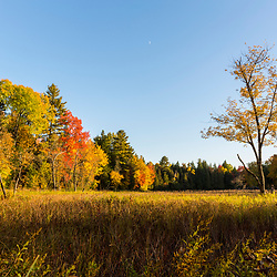 A floodplain meadow next to the East Branch of the Penobscot River in Maine's Northern Forest. Fall.