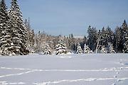 verschneiter Winterwald, Wurmberg im Hintergrund, Braunlage, Schnee, Winter, Harz, Niedersachsen, Deutschland | forest, Wurmberg, snow, winter, Harz, Lower Saxony, Germany