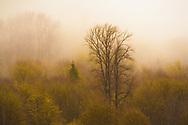 Dreamlike landscape in Skagit Valley, Washington