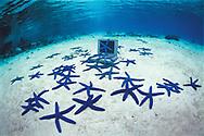 Blue starfish gatther around a laptop computer on the sand bottom. Tonga.