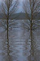 Hert aan de IJssel met hoogwater.<br /> Het hert is geschonken aan de gemeente Arnhem door Essent en staat aan de A12.