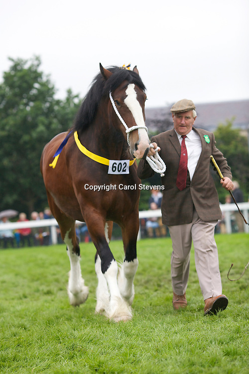 Reserve Shire Champion<br />