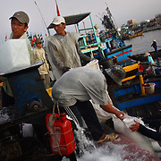 At the early morning fish market in Phan Thiet, Vietnam.
