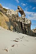 Buried kelp along Keyhole Rock, Aramoana, New Zealand