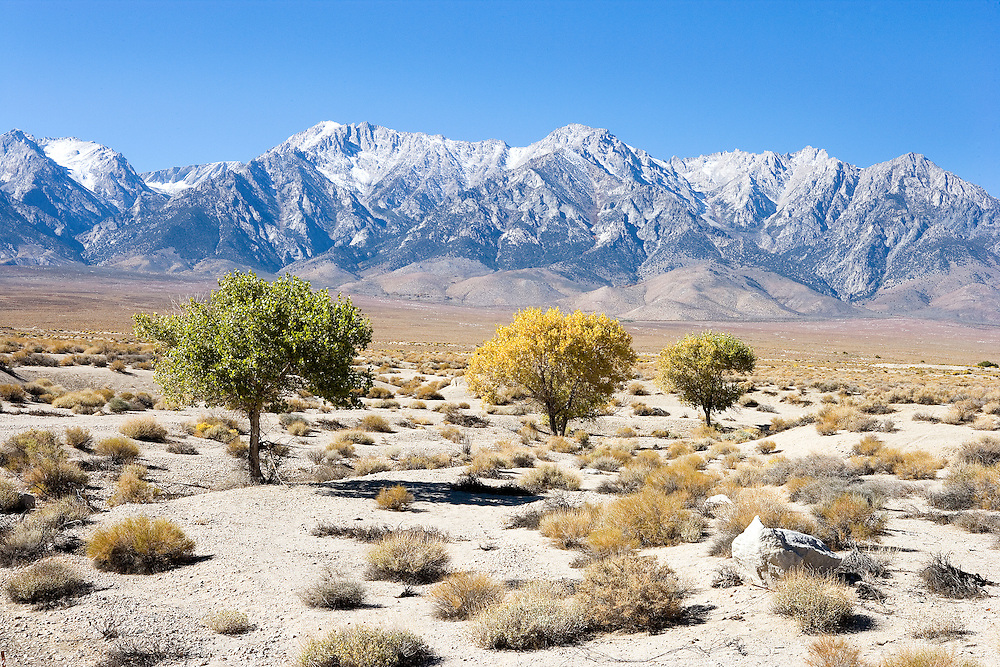 Autumn Morning in The Desert and Sierra Nevada Mountains, Owens Valley, California