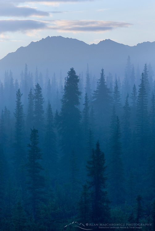 Morning fog over boreal forest Alaska
