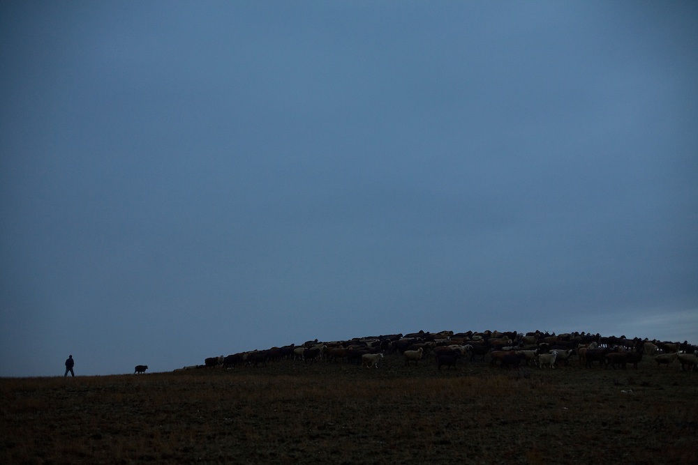 CREDIT: DOMINIC BRACCO II..SLUG:PRJ/KAZAKHSTAN SHEEP HERDERS..DATE:10/22/2009..CAPTION:Zhumatai Muzdybayev walks his sheep on a pasture near his home near Semey, Kazakhstan. The herders live near an atomic lake which was made during the 1970s as part of an experiment by the USSR to create lakes from atomic bombs. The lake is in an area known as The Polygon, a test site for more than 400 of the Soviet Union's nuclear weapons.