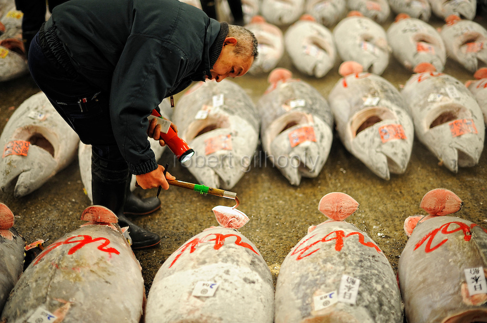 A buyer checks for fish quality of large tuna lined up for auction at the world's largest fish and marine products market in Tsukiji, Tokyo on Monday 30 March 2009.