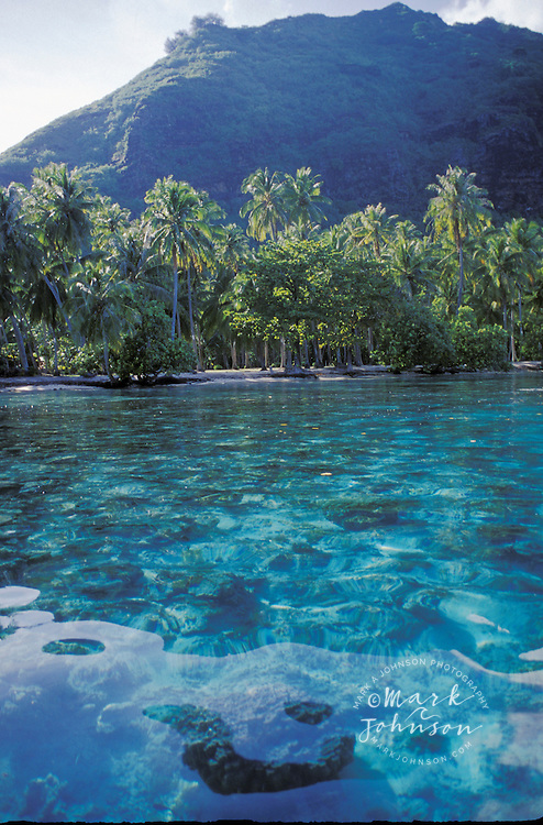 Coral reef & coconut trees, Moorea, French Polynesia