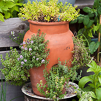An inventive urban rooftop container garden with a wide variety of edible plants in an even wider variety of contianers.