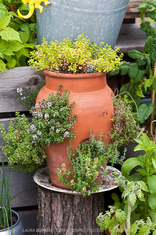 An inventive urban rooftop container garden with a wide variety of edible plants in an even