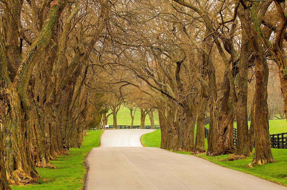 Osage orange trees, Pisgah Pike, Versailles (near Lexington), Kentucky USA