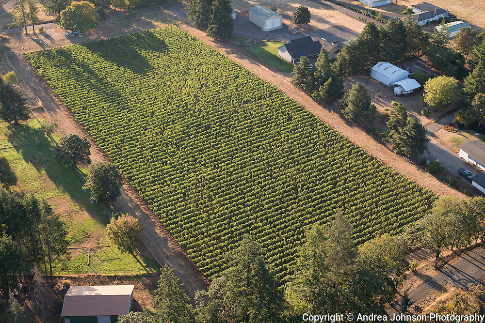 Raindance vineyard, Chehalem Mountain AVA, Willamette Valley, Newberg vineyard, Chehalem Mountain AVA, Willamette Valley, Newberg
