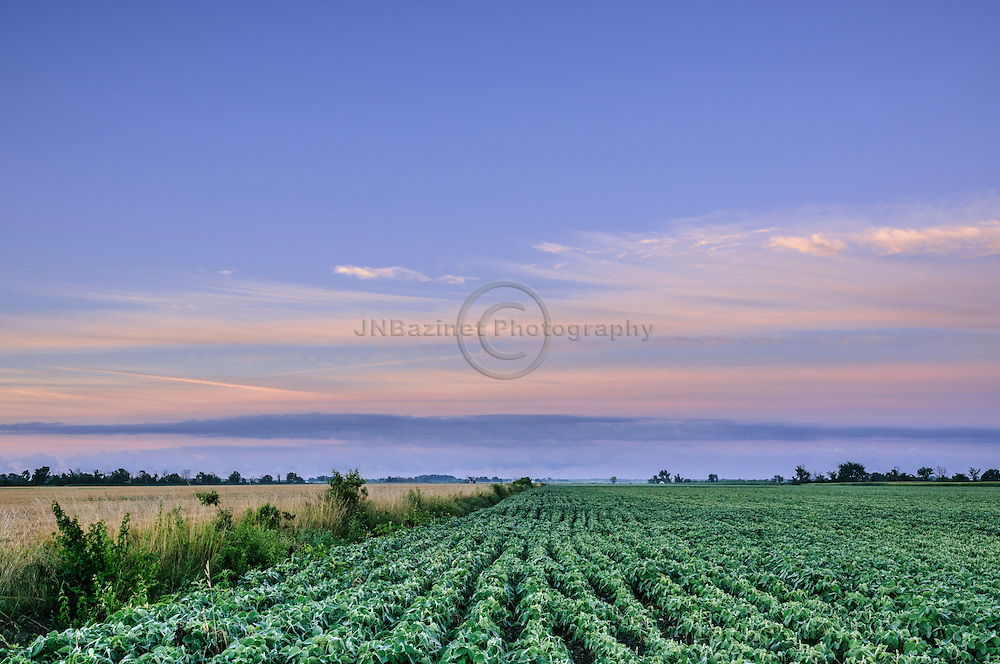 Daybreak over agricultural field in Leamington, Ontario Canada