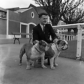 1961, B768 Irish Kennel Club Dog Show