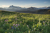 Mount Shuksan seen from wildflower meadows of Skyline Divide, Mount Baker Wilderness Washington