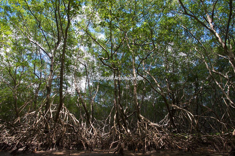 Mangrove extraordinaire cache?e entre les rivie?re Jequitithionha et Prado///Extraordinary mangrove swamp hidden between the river Jequitithionha and Prado