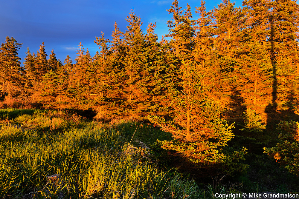Sunset on trees along Chedabucto Bay (Atlantic Island)<br /> Fox Island<br /> Nova Scotia<br /> Canada
