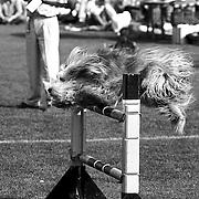 NLD/Soest/19920927 - Hondenwedstrijden ZOCS in Soest