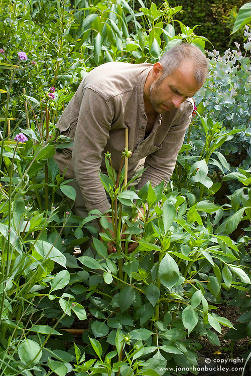 Staking dahlias. Fergus Garrett looping string around dahlias