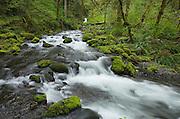 Groton Creek, Columbia River Gorge National Scenic Area, Oregon