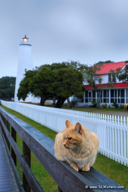Yellow tabby keeps watch over Ocracoke Lighthouse as the morning storm clears.