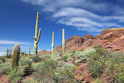 Organ Pipe Cactus National Monument Park