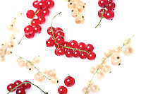 White and red currants on white background