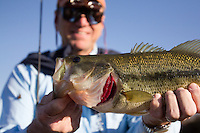 FLY ANGLER WITH A LARGEMOUTH BASS