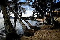 Palm trees line Playa Esperanza, Vieques, Puerto Rico.