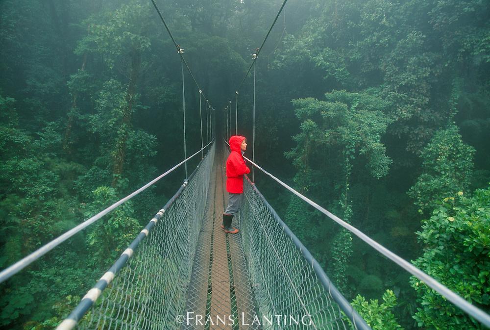 Hiker on canopy walkway, Monteverde Cloud Forest Preserve, Costa Rica