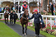 COPPER KNIGHT (3) ridden by David Allan and trained by Tim Easterby enter the Winners Enclosure after winning The Parsonage Hotel and Cloisters Spa Handicap Stakes over 5f (£20,000)    during the Countryside Raceday, October Finale at York Racecourse, York, United Kingdom on 12 October 2018. Pic Mick Atkins