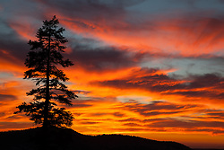 """Blackwood Canyon Sunset 1"" - Photograph taken in Tahoe's Blackwood Canyon of a pine tree and mountain silhouette with a beautiful fiery orange and yellow sunset background."