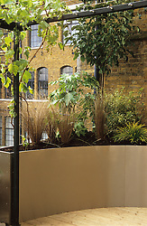 Raised metal planter on roof terrace with grapevine growing over pergola. Design: Diarmuid Gavin