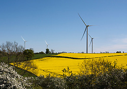 © licensed to London News Pictures. Warwickshire, UK  01/05/11. Newly constructed wind turbines stand tall amongst the yellow of a rape field.. Please see special instructions for usage rates. Photo credit should read: Sam Spickett/LNP