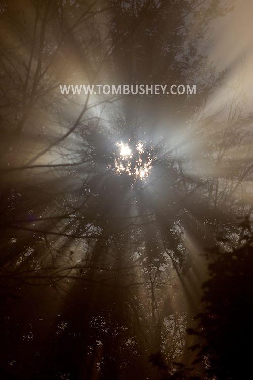 Middletown, New York - Moonlight shines through tree branches in the fog on the night of Oct. 4, 2012